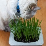 Cat Grass DIY Concrete Planter