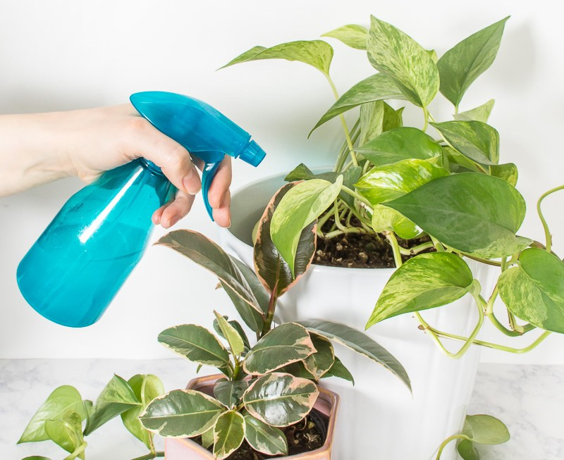 How to get your plants ready for the growing season with some spring cleaning.