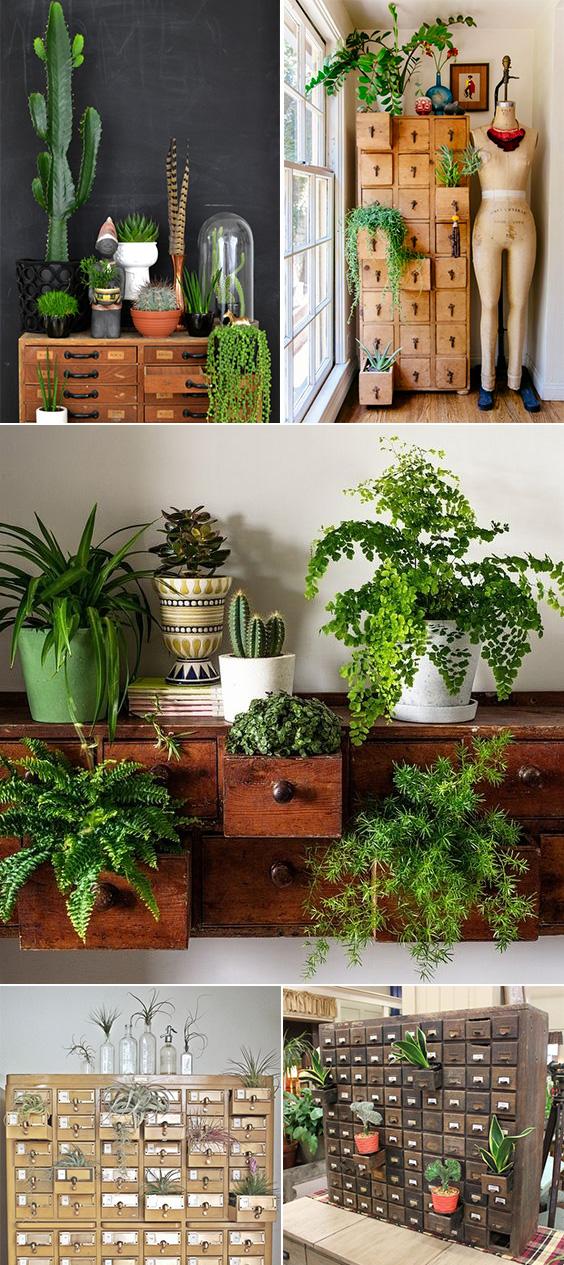 Plant Drawers Inspiration