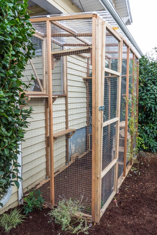 Want to let your cats outdoors, but keep them protected? Check out these tips and advice for building a catio.