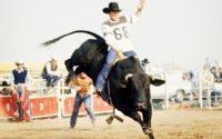 bullriding2