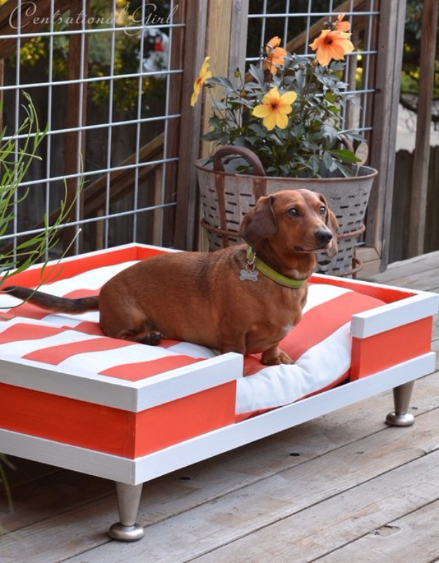 DIY Dog Beds - DIY Modern Dog Bed - Projects and Ideas for Large, Medium and Small Dogs. Cute and Easy No Sew Crafts for Your Pets. Pallet, Crate, PVC and End Table Dog Bed Tutorials http://diyjoy.com/diy-dog-beds
