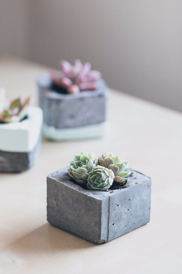 small indoor plants, best indoor plants, cement diy planters