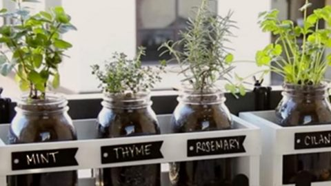 You Can Plant Fresh Herbs In Minutes With This Mason Jar