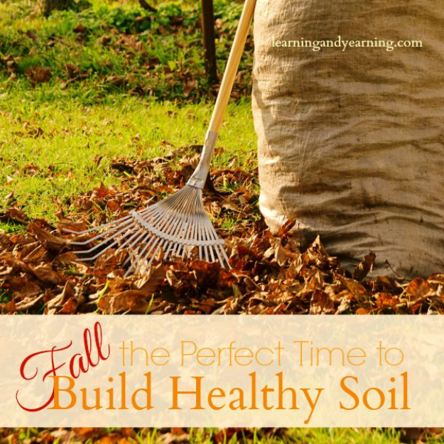 Best Gardening Ideas for Fall - Build Healthy Soil During Fall - Cool DIY Garden Ideas for Planting Autumn Varieties of Flowers and Vegetables - Pumpkins, Container Gardens, Planting Tips, Herbs and Easy Ideas for Beginners http://diyjoy.com/gardening-ideas-fall