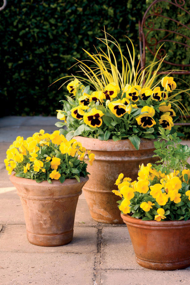 33 DIY Gardening Ideas for Fall on Tree Planting Ideas For Backyard id=79384