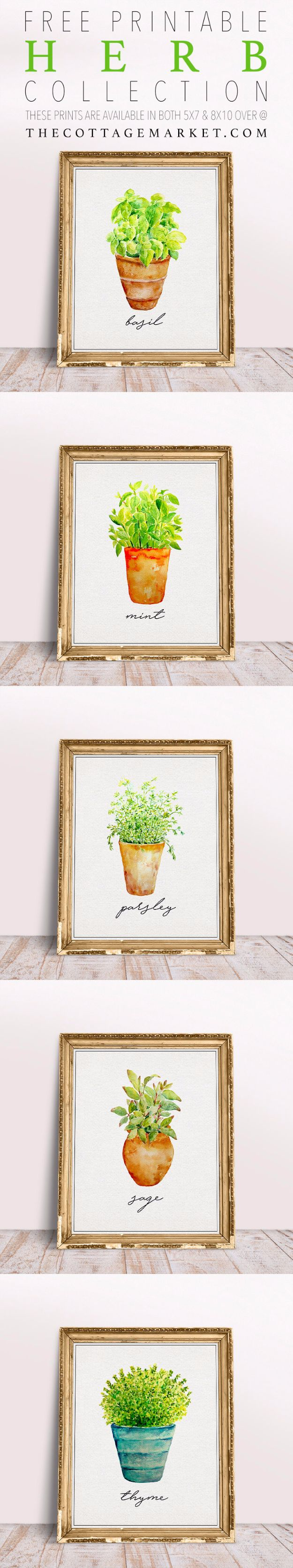 Free Printables For Your Walls - Free Printable Herb Collection - Best Free Prints for Wall Art and Picture to Print for Home and Bedroom Decor - Ideas for the Home, Organization - Quotes for Bedroom and Kitchens, Vintage Bathroom Pictures - Downloadable Printable for Kids - DIY and Crafts by DIY JOY http://diyjoy.com/free-printables-walls
