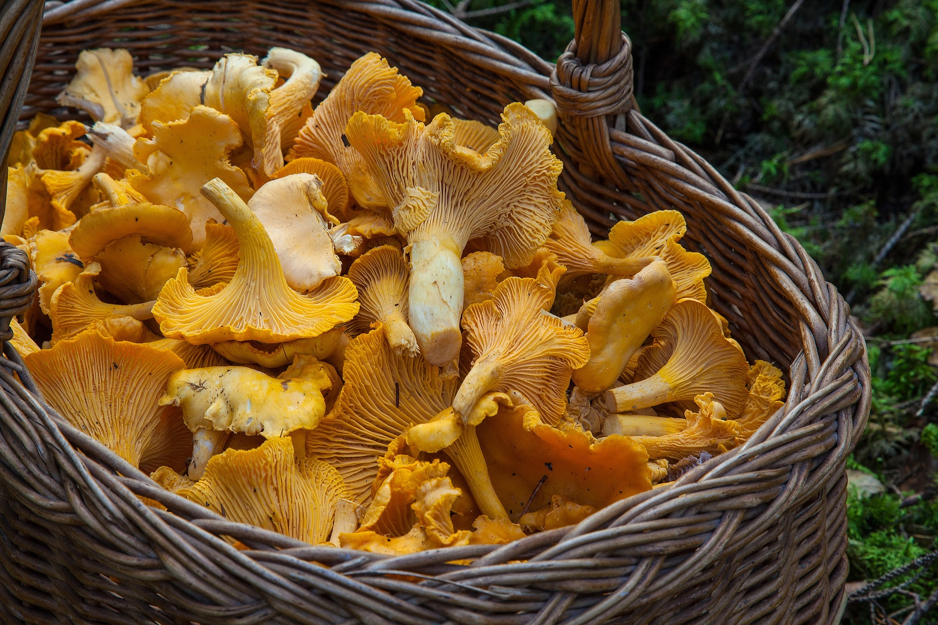 chanterelle basket