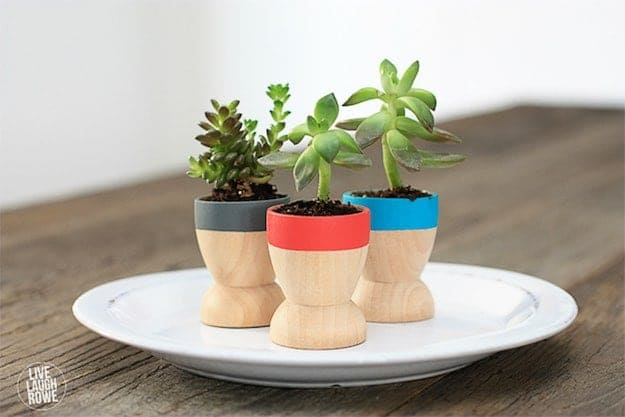 Mini Succulents | Easy Crafts To Make And Sell
