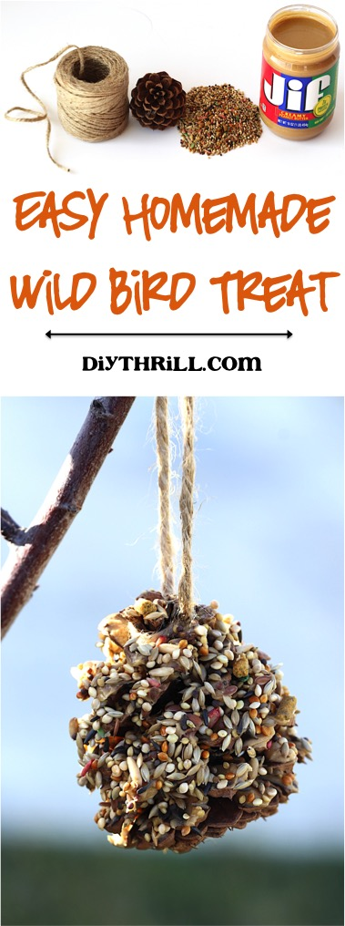 Easy Homemade Wild Bird Treat at DIYThrill.com