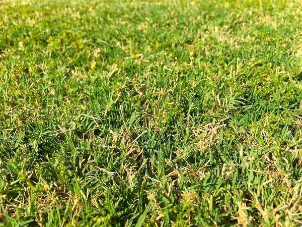 Grass Compost 1