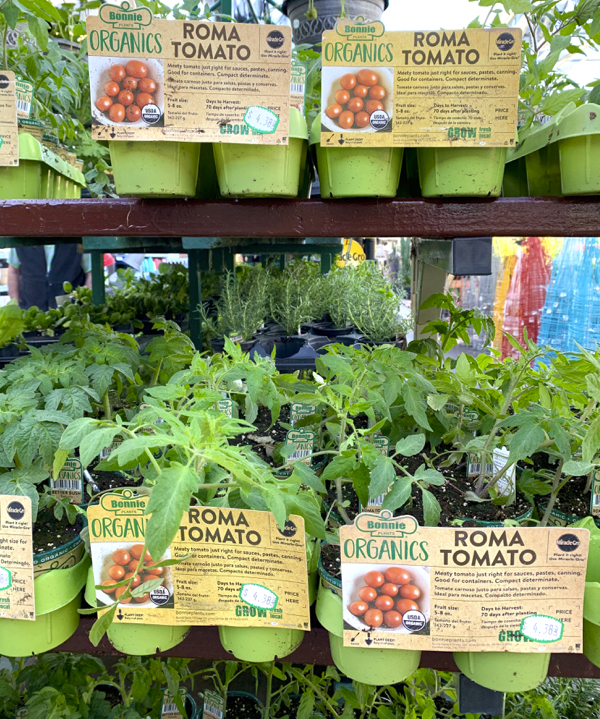Should You Grow Tomatoes From Seeds or Plants?