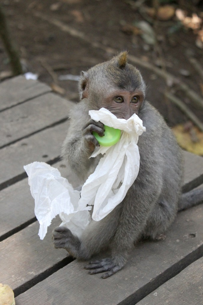 Rubbish Monkey Forest Ubud Bali