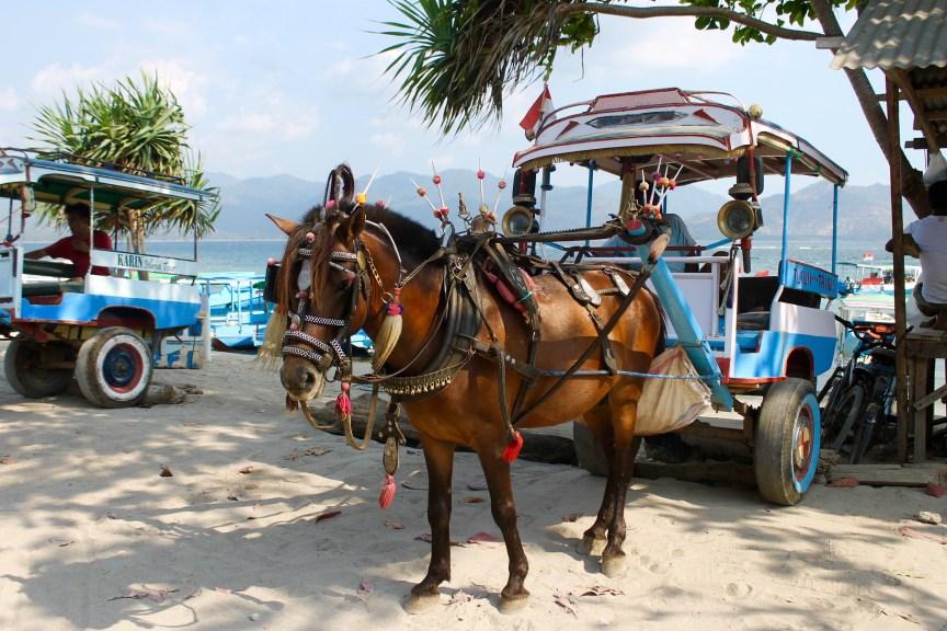 Gili Air Horse Cart