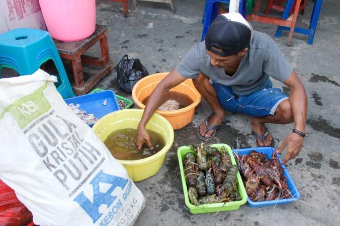 Marron Man Kupang Market