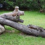 Tampico Crocodile & Iguana Wildlife