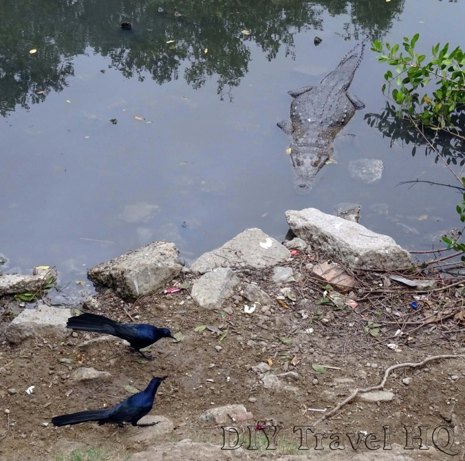Tampico Crocodile Lookout with Birds