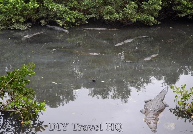 Tampico Crocodile Lookout
