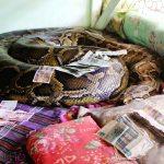 Snakes, Stupas, Cheroots & Buddhas in Bago!