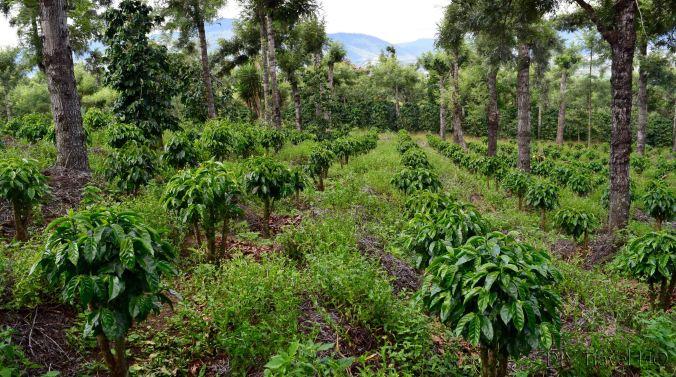 Coffee plots on DLG tour