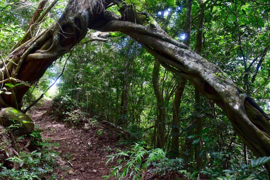 El Imposible National Park Hiking Trail