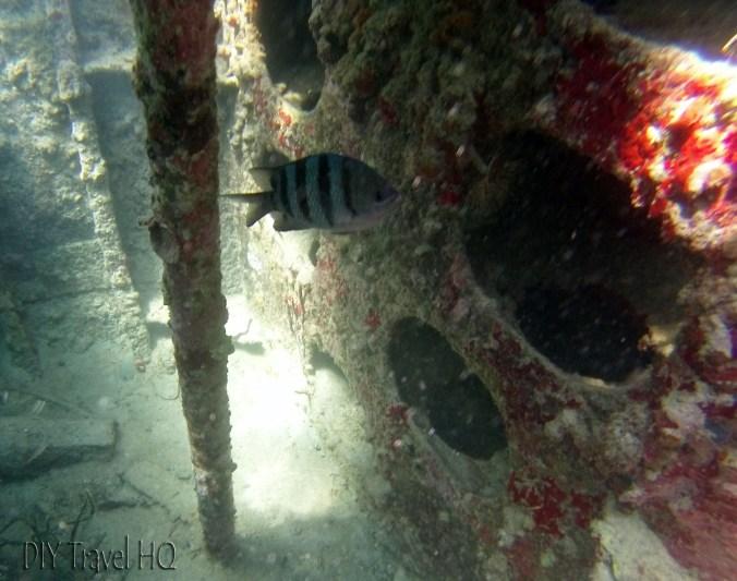 Inside the Ship Wreck at Dog Island in San Blas