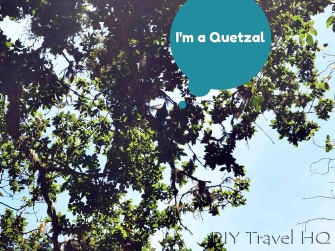 Quetzal on Sendero Los Quetzales Trail Volcan Baru National Park