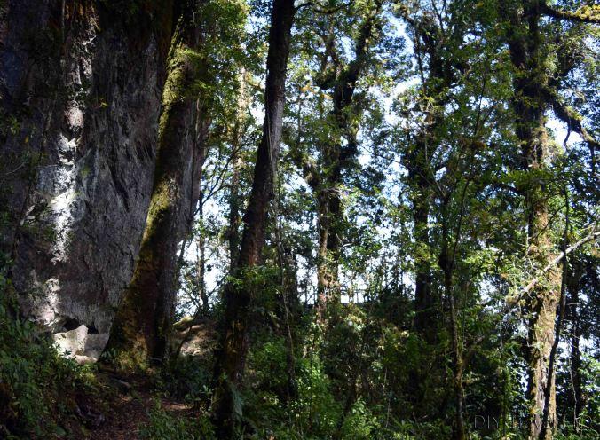 Sendero Los Quetzales Mirador Las Rocas Rock Cliff