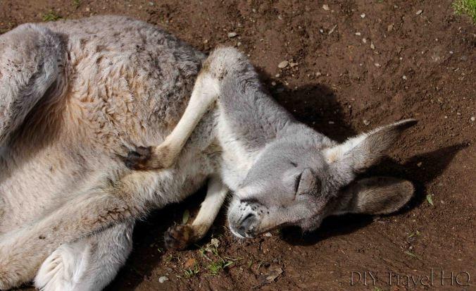 Kangaroo Gorge Wildlife Park