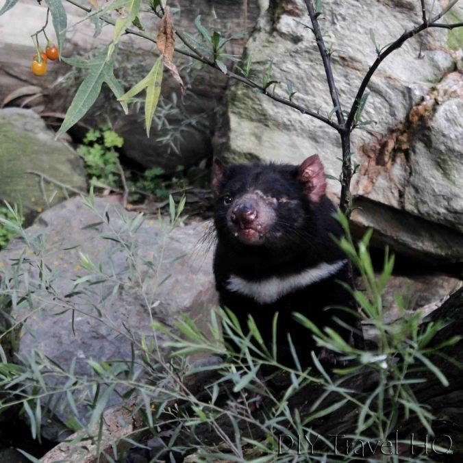 Tasmanian Devil Gorge Wildlife Park