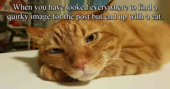 Image of bored looking cat after having failed to find a good image for the blog post.