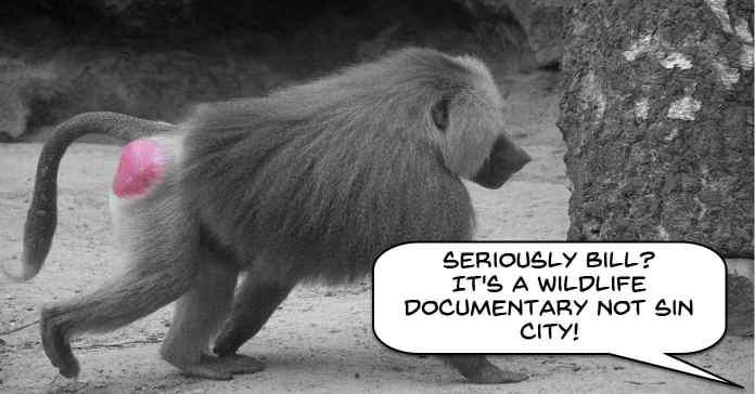 sin-city-baboon