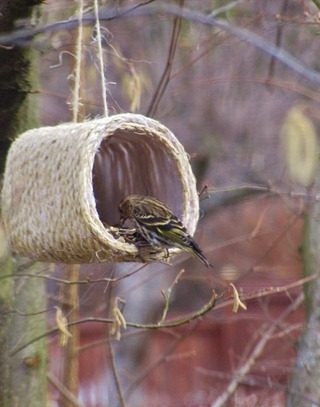 Sisal Rope & Milk Jug Bird Feeder