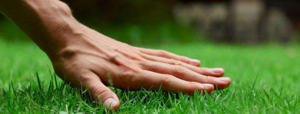 Как правильно посадить газонную траву, чтобы получить ...