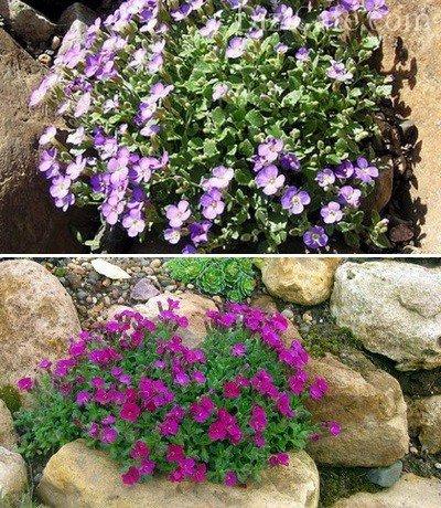 Растения для альпийской горки названия лучших цветов