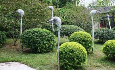 Trame Antisia Ostrich