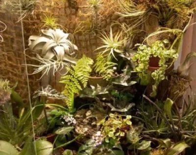 Showcase Hijau dengan tanaman tropis