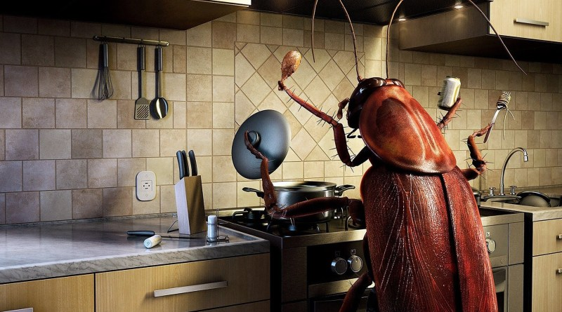 kitchen-insect-bug