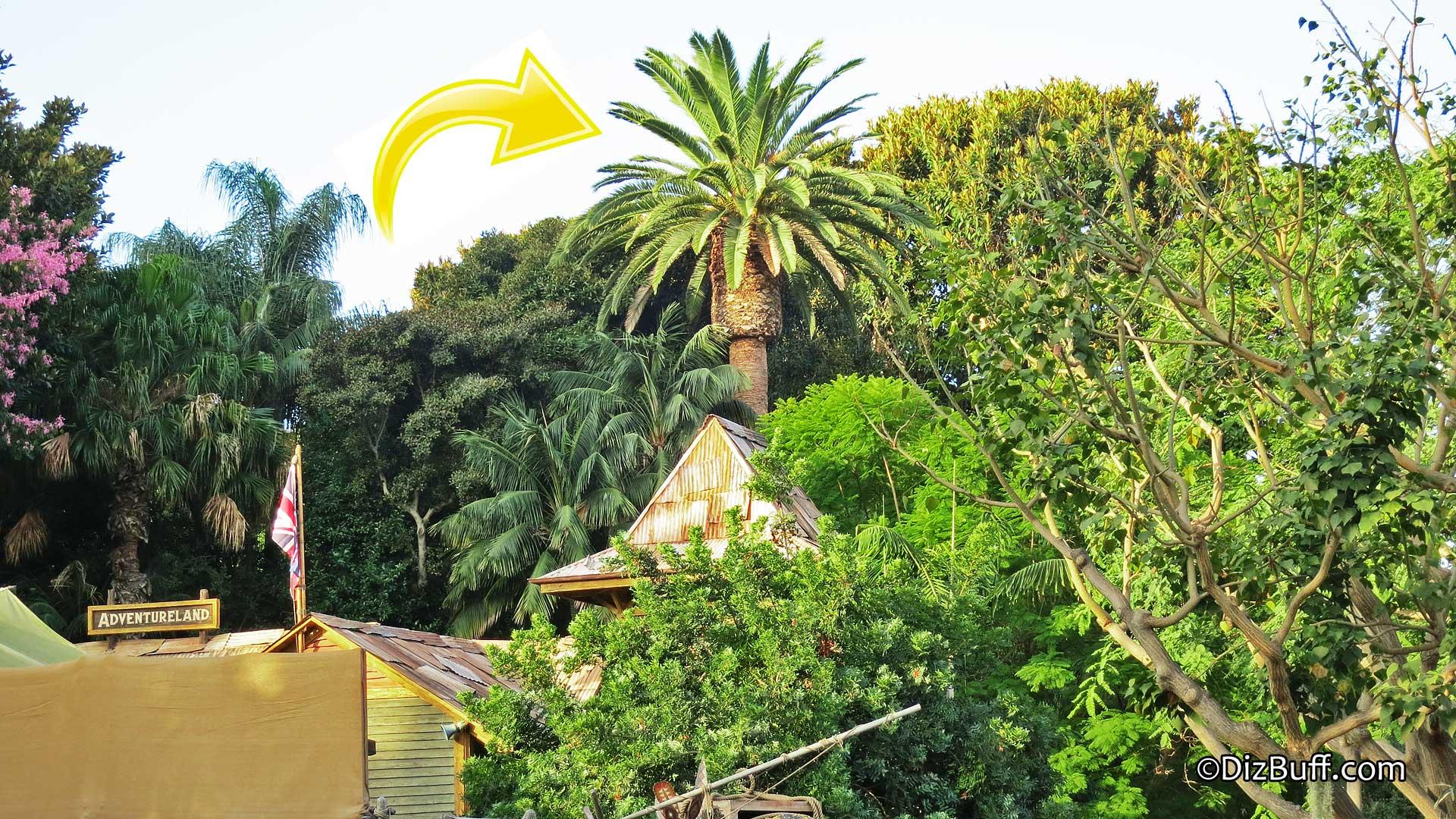 Dominguez Palm Disneyland Dizbuff Com