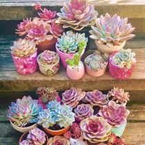 45+ Know What Gurus Think About Assorted Succulents 112