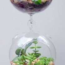 45+ Know What Gurus Think About Assorted Succulents 150
