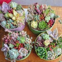 45+ Know What Gurus Think About Assorted Succulents 187