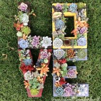 45+ Know What Gurus Think About Assorted Succulents 204