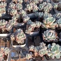 45+ Know What Gurus Think About Assorted Succulents 221