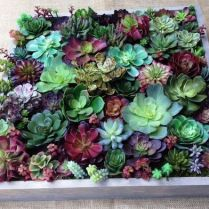 45+ Know What Gurus Think About Assorted Succulents 255