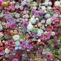 45+ Know What Gurus Think About Assorted Succulents 258