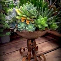 45+ Know What Gurus Think About Assorted Succulents 268