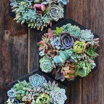 45+ Know What Gurus Think About Assorted Succulents 279