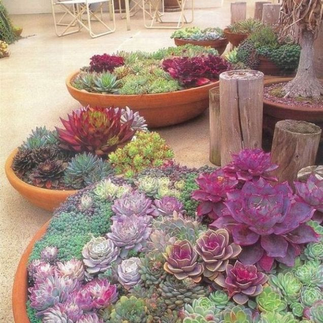 45+ Know What Gurus Think About Assorted Succulents 286