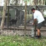 How To Build A Chicken Coop – Five Different Essential Goals To Achieve Success When Building